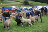 Reeth Show 2010 - Swaledale sheep judging