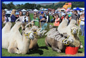Reeth Show 2016